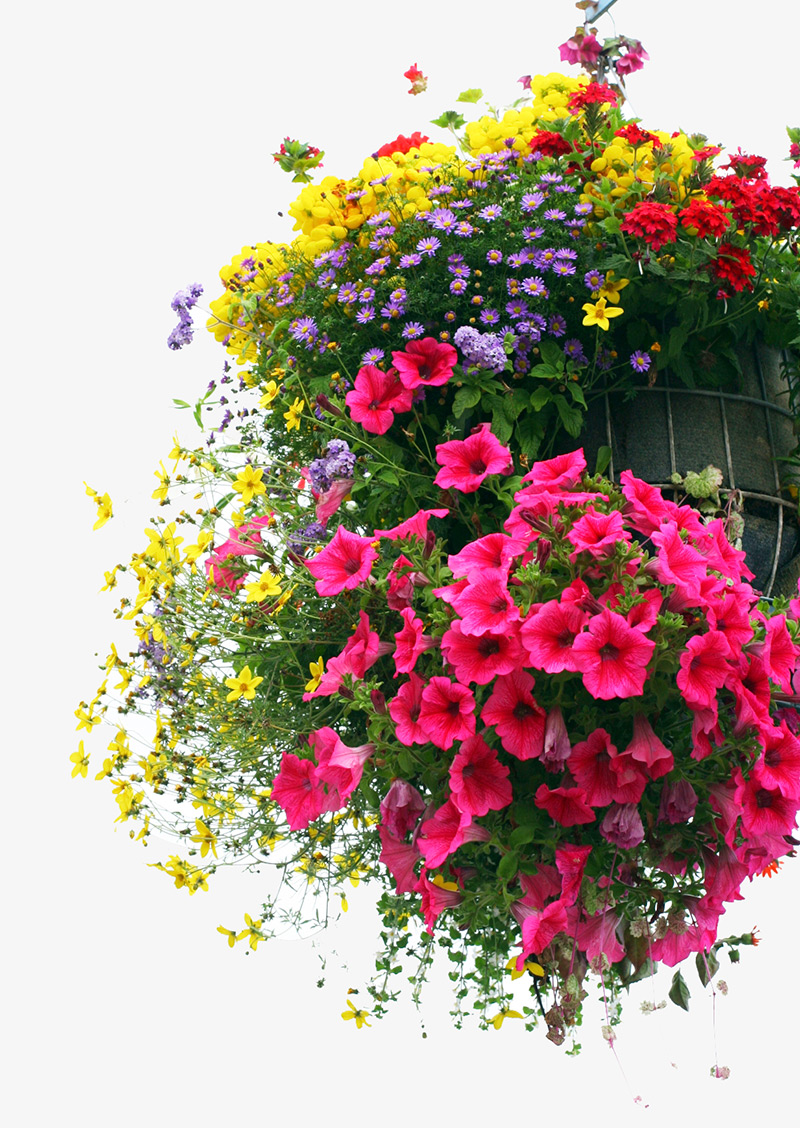 hanging-basket-windsor